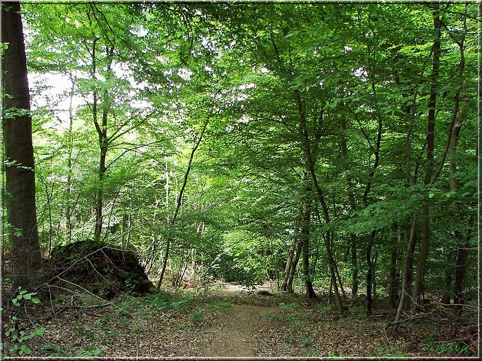 Lyons la Forêt : La Fontaineresse 20080512_035