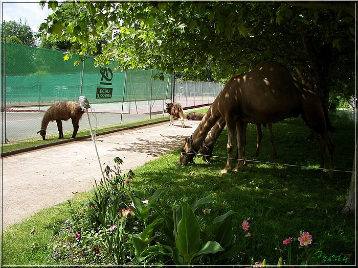 Le parc Parissot 20080613_014