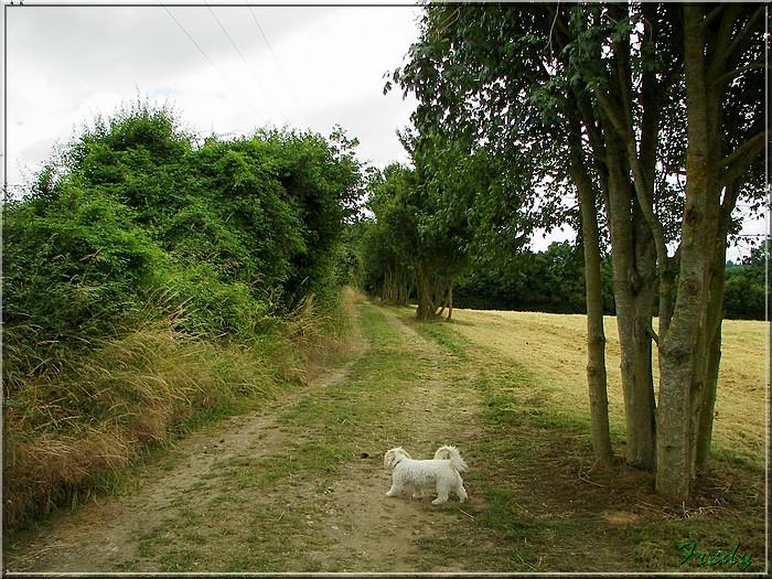 Le Sacq, circuit des Moulins 20080628_027
