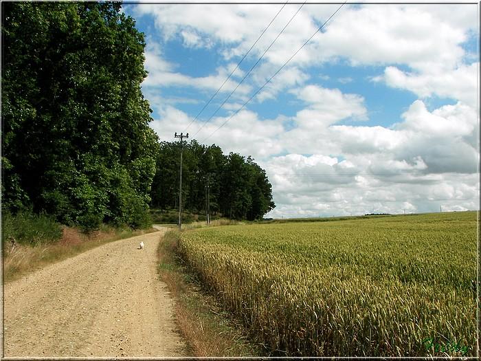 Le Sacq, circuit des Moulins 20080628_063