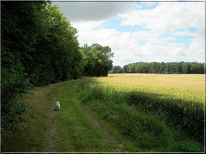 Le Sacq, circuit des Moulins 20080628_064