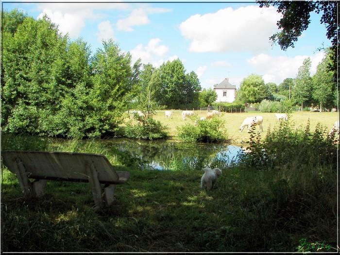Le Sacq, circuit des Moulins 20080628_078