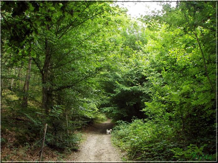 Conches, la Vallée du Rouloir 20080803_024