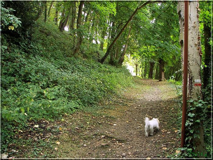 Conches, la Vallée du Rouloir 20080803_072