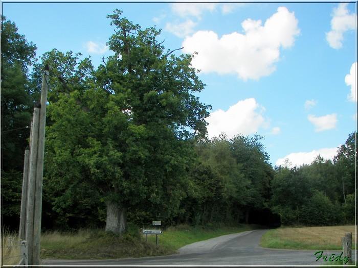 Saint Aubin du Thenney 20080823_056