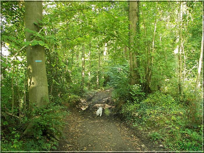 Aizier, le chemin des Sources Bleues 20080925_062
