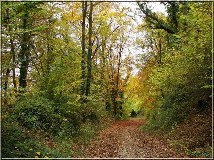 Anet, promenade en forêt 20081026_015