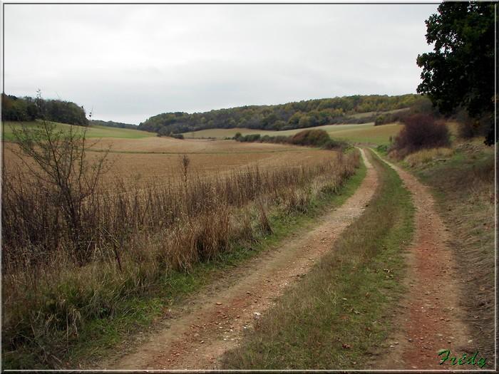 Anet, promenade en forêt 20081026_025