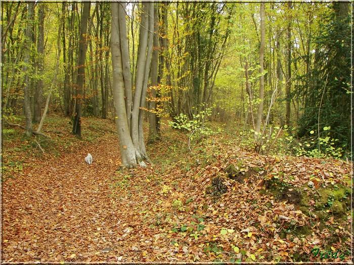 Anet, promenade en forêt 20081026_027