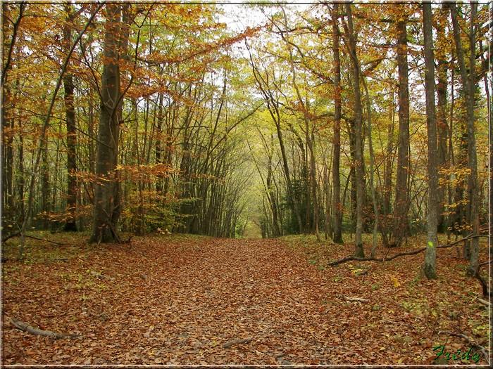 Anet, promenade en forêt 20081026_031