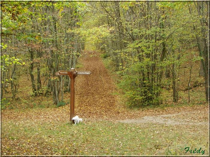 Anet, promenade en forêt 20081026_036