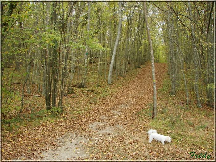 Anet, promenade en forêt 20081026_037