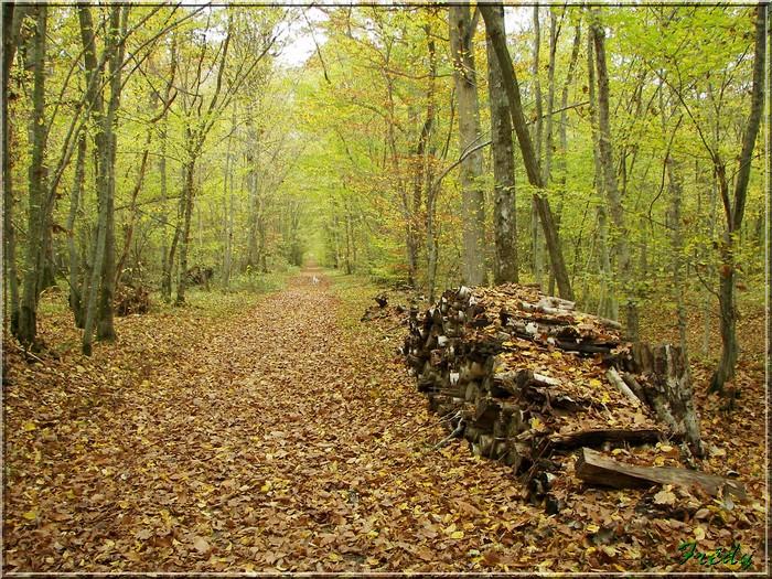 Anet, promenade en forêt 20081026_040