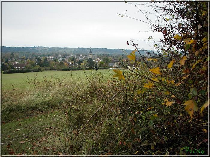 Anet, promenade en forêt 20081026_044