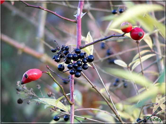 Réserve ornithologique de Léry-Poses 20081122_019