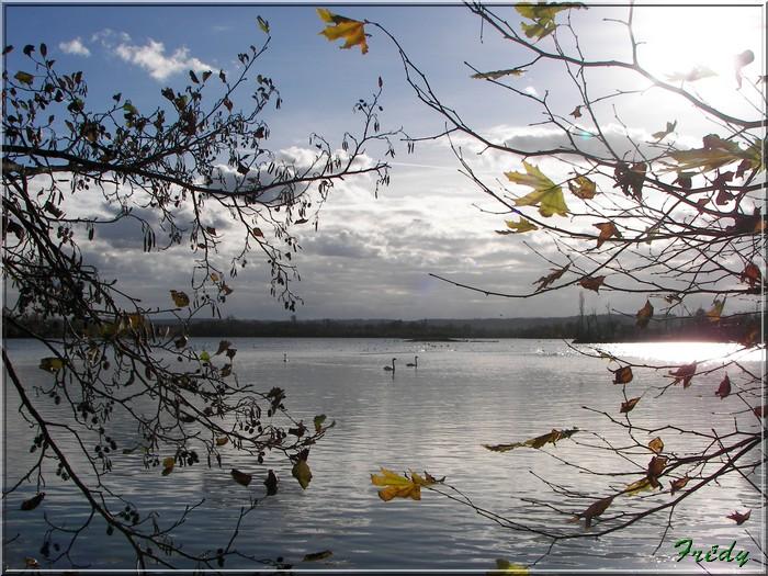 Réserve ornithologique de Léry-Poses 20081122_038
