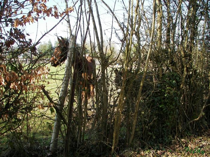 La Vallée du Gueil 20090315_089
