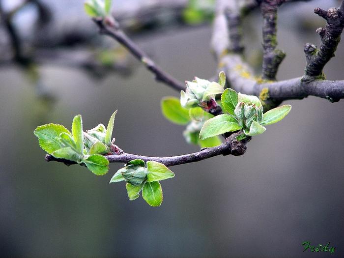 Le printemps au jardin 20090410_001