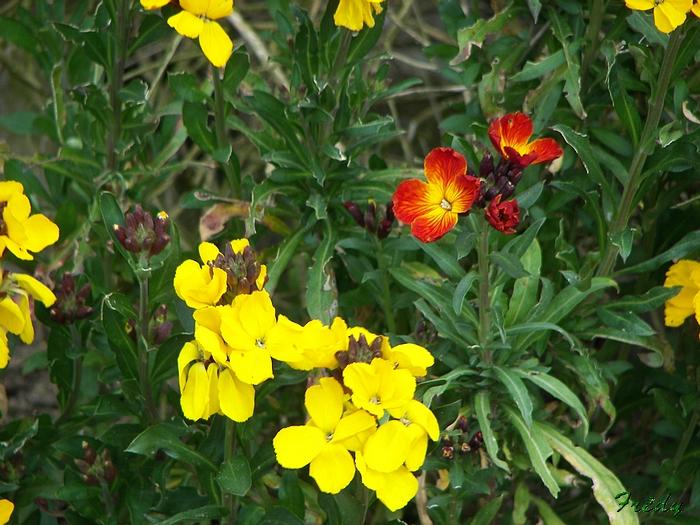 Le printemps au jardin 20090410_005