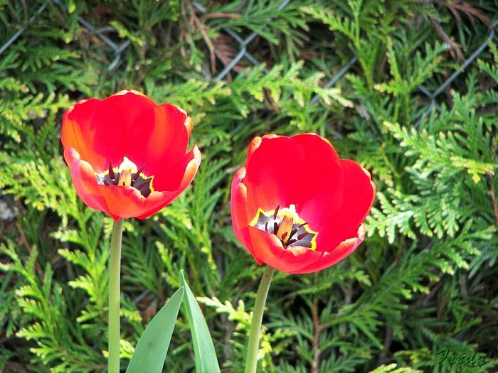 Le printemps au jardin 20090412_006
