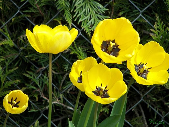 Le printemps au jardin 20090412_007