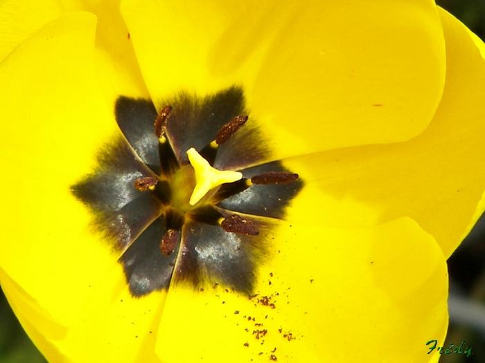 Le printemps au jardin 20090412_011