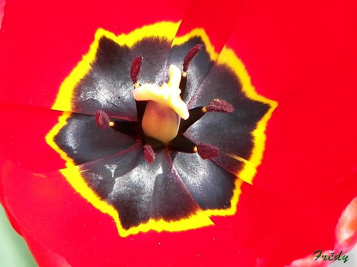Le printemps au jardin 20090412_012