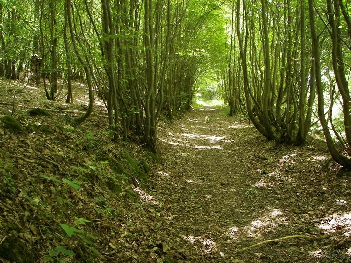 D'Acon à Breux, seul avec Ulysse 20090605_007