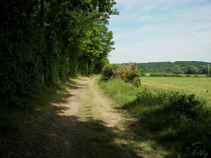 D'Acon à Breux, seul avec Ulysse 20090605_044