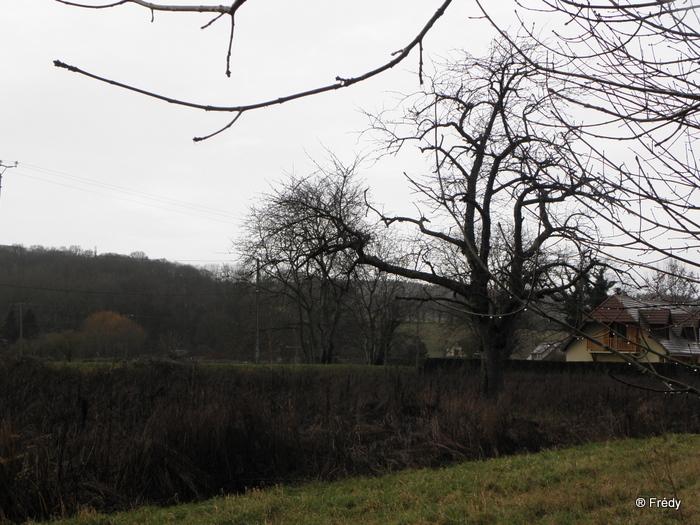 Acquigny, balade de repos avec Iton-Rando 20091230_006