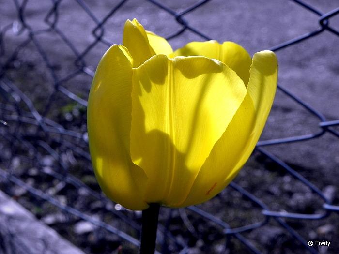 Le printemps au jardin 20100419_005