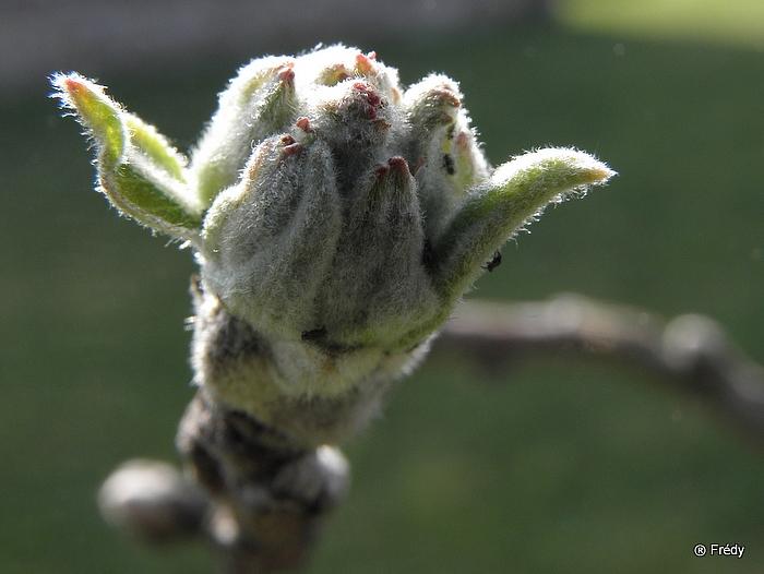 Le printemps au jardin 20100419_015