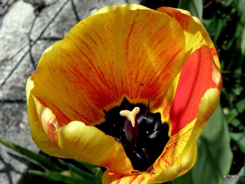 Le printemps au jardin 20100424_020