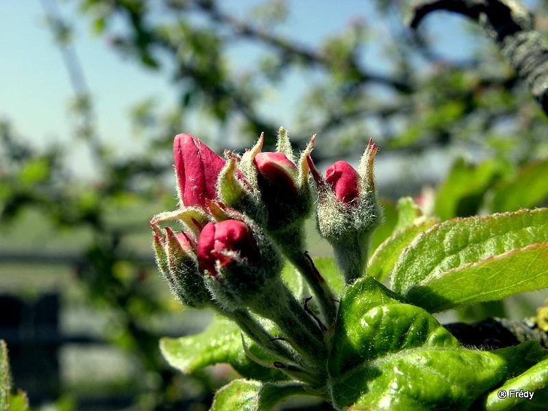 Le printemps au jardin 20100424_023