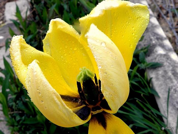 Le printemps au jardin 20100503_003
