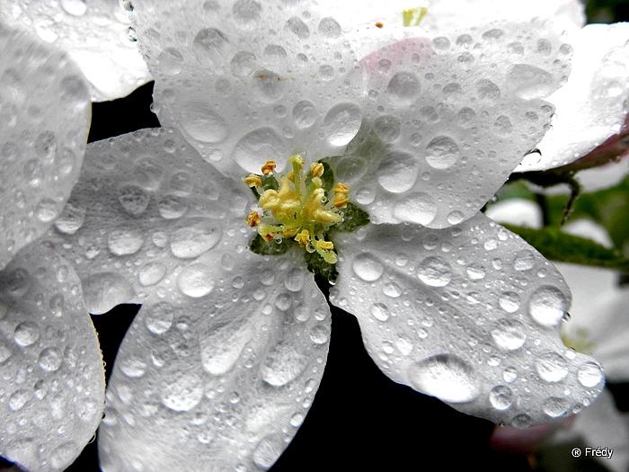 Le printemps au jardin 20100503_008