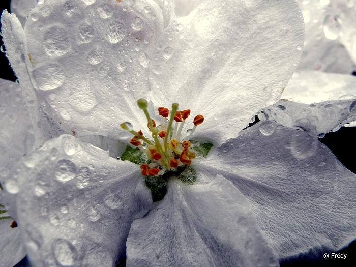 Le printemps au jardin 20100503_017
