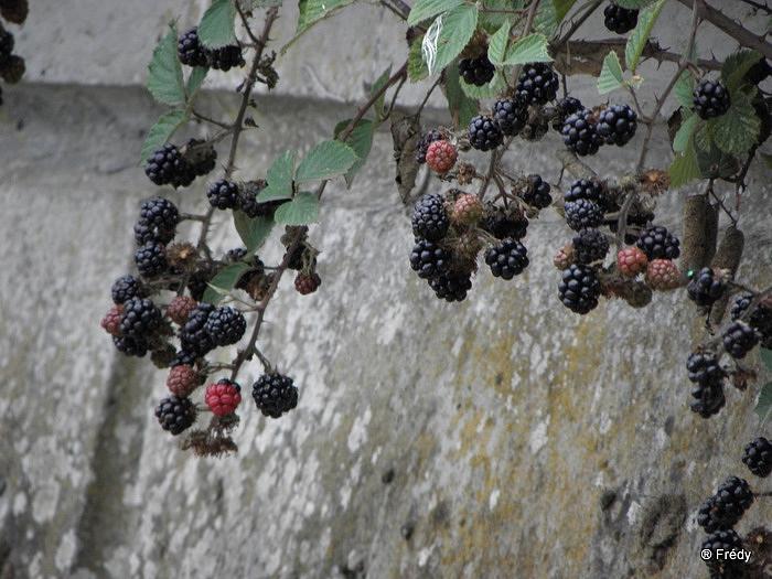 Le Manoir du Hom à Beaumont Le Roger 20100818_012