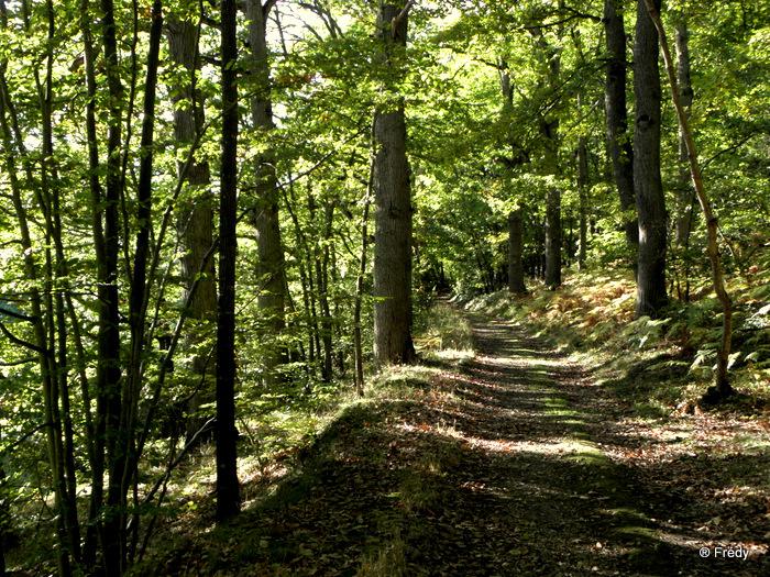 Entre Acon et Dampierre Sur Avre 20101025_020