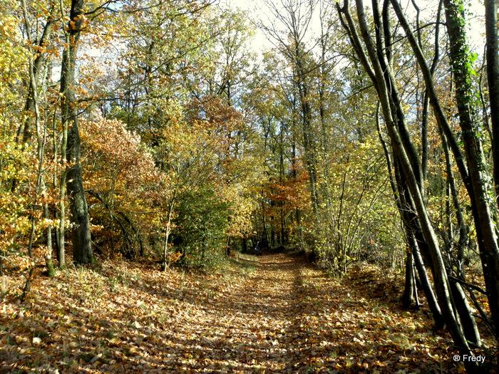 Les étangs de Damville et Le Sacq 20101108_015
