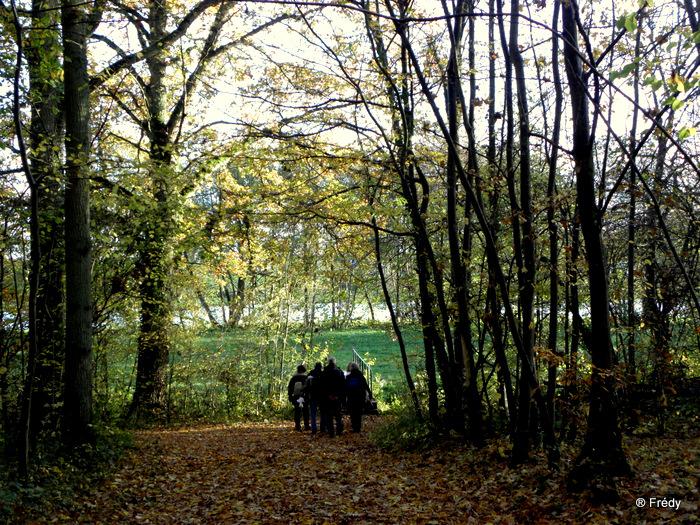 Les étangs de Damville et Le Sacq 20101108_019