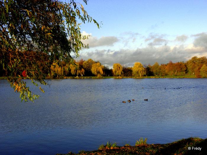 Les étangs de Damville et Le Sacq 20101108_022