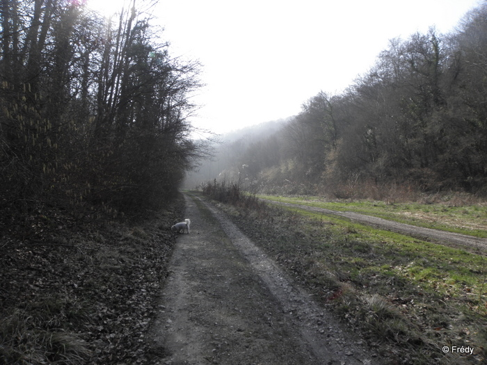 Brosville, variante de 10 kilomètres 20110302_006
