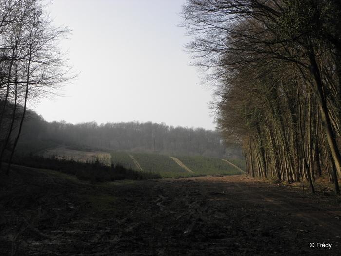 Brosville, variante de 10 kilomètres 20110302_007