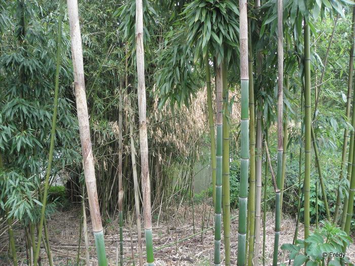 Les étangs d'Acquigny, sans Iton-Rando 20110508_004