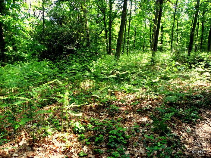 Les étangs d'Acquigny, sans Iton-Rando 20110508_010