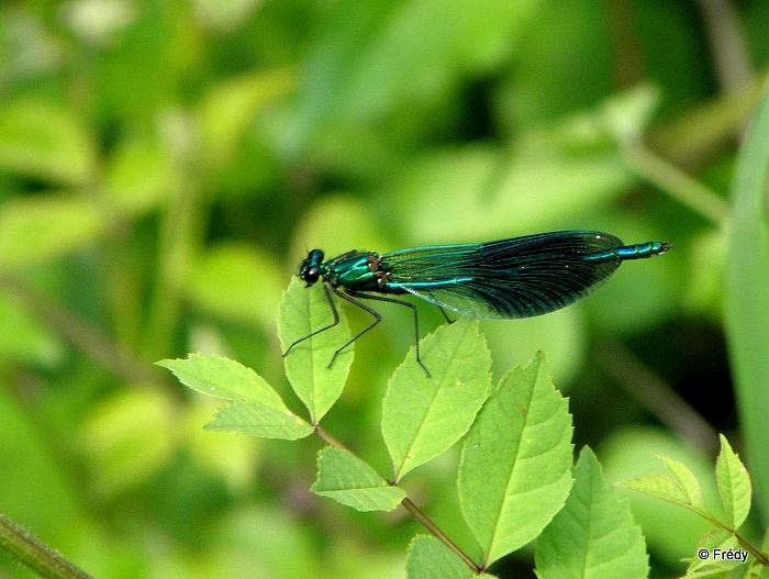Les étangs d'Acquigny, sans Iton-Rando 20110508_022