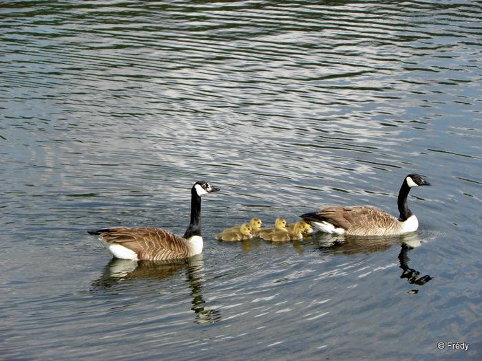 Les étangs d'Acquigny, sans Iton-Rando 20110508_024
