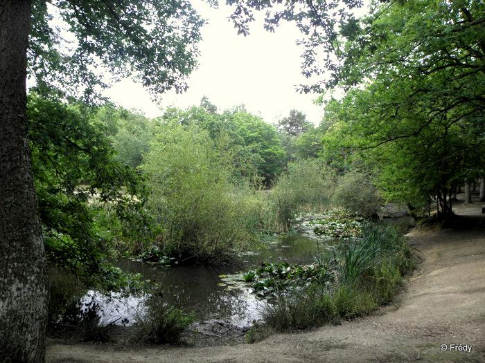 11 kilomètres en forêt d'Evreux 20110717_005