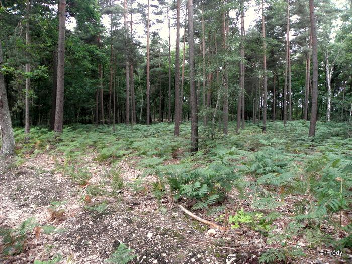 11 kilomètres en forêt d'Evreux 20110717_006